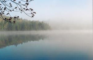fog - photo