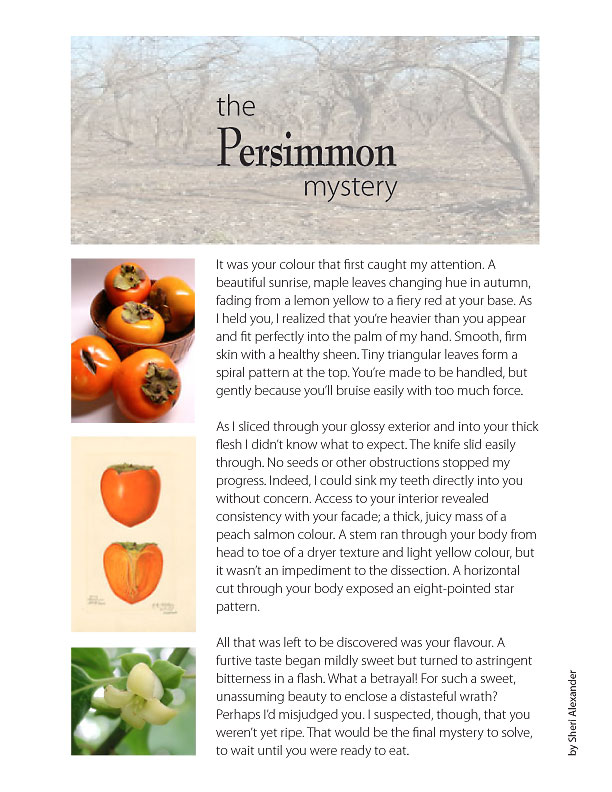 persimmon study and story