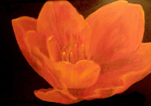 tulip open - acrylic painting